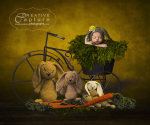 Easter-yellow-background-bike-planter-carots-bunnies-done